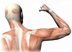 Влияние массажа на мышцы