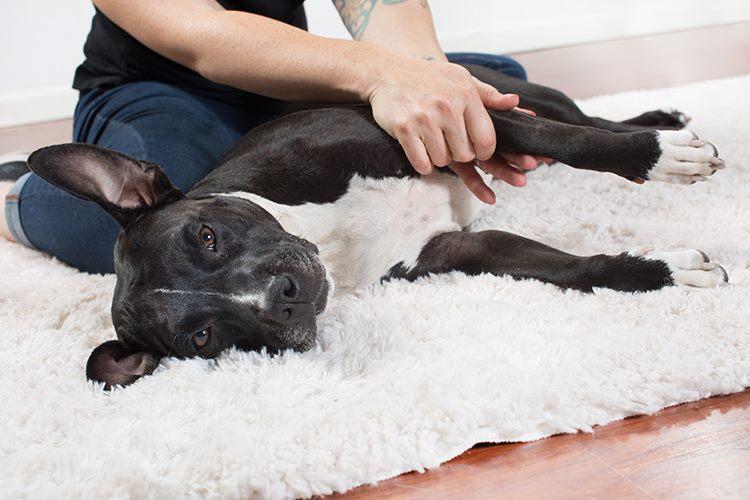 Зачем собаке массаж?